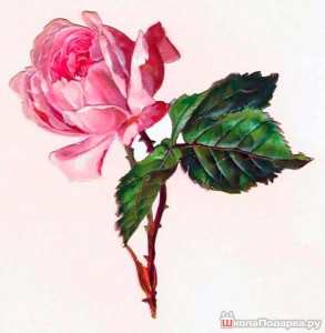 рисунок-на-бумаге-цветок