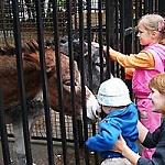 поход-в-зоопарк
