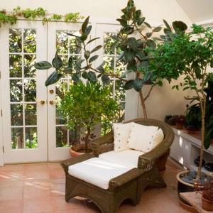 домашние-растения-для-дачи