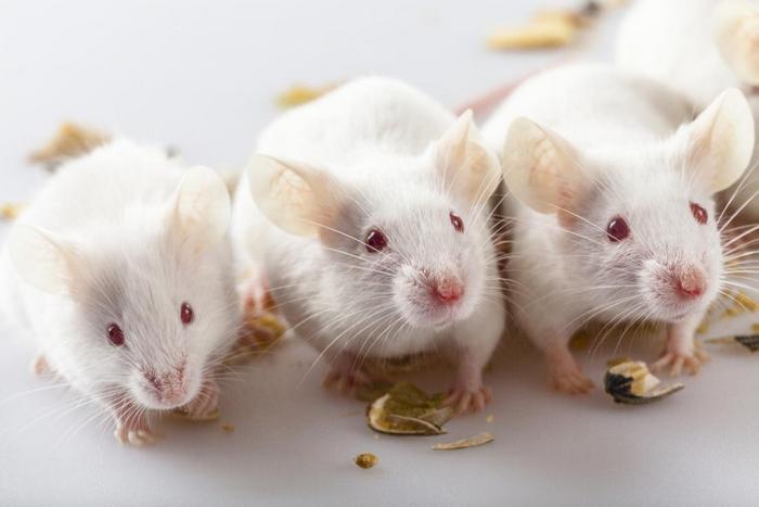 Подарок на год Белой Крысы 2020